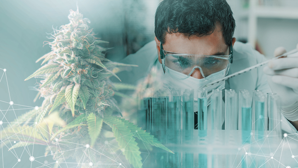 Researcher in a lab studying cannabis and autism