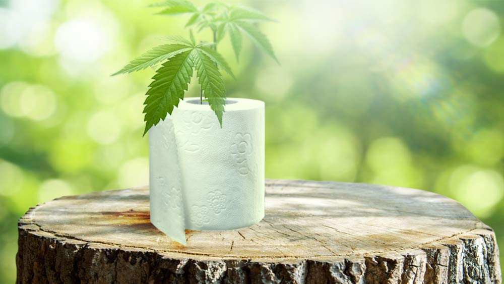 Cannabis plant inside a toilet paper roll