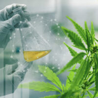 Half of money spent on cannabis research focuses on potential harms of plant