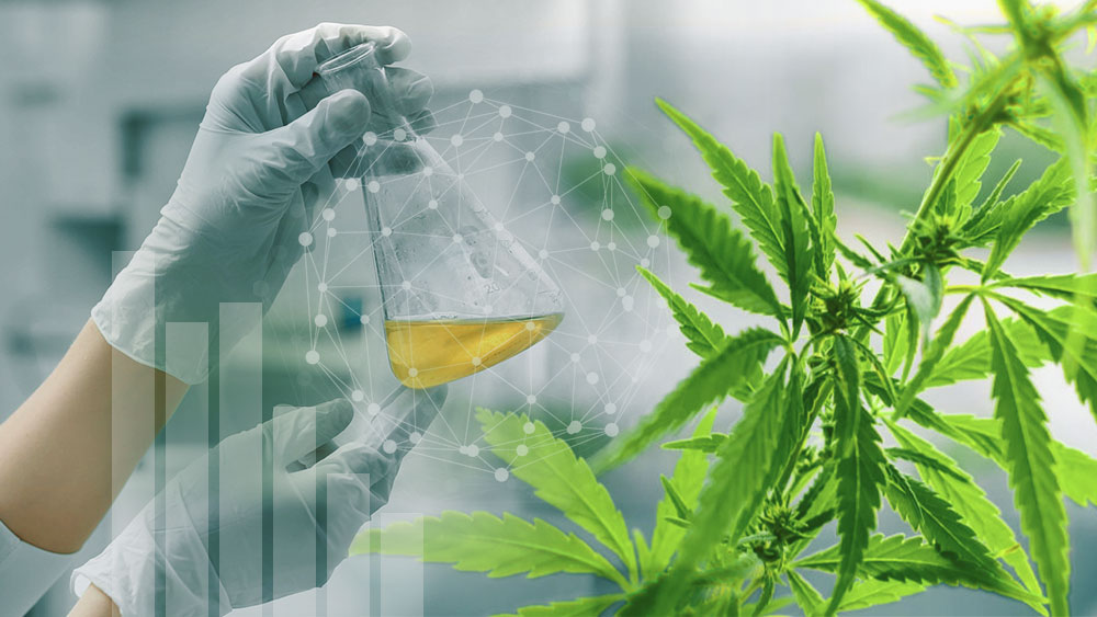 Hands in lab gloves inspecting a vessel with cannabis oil in it
