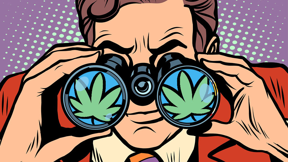 Illustration of a man with binoculars eyeing cannabis