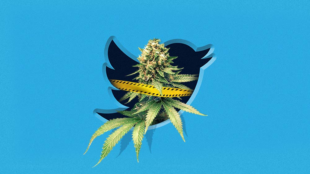 Twitter logo bird and marijuana inside