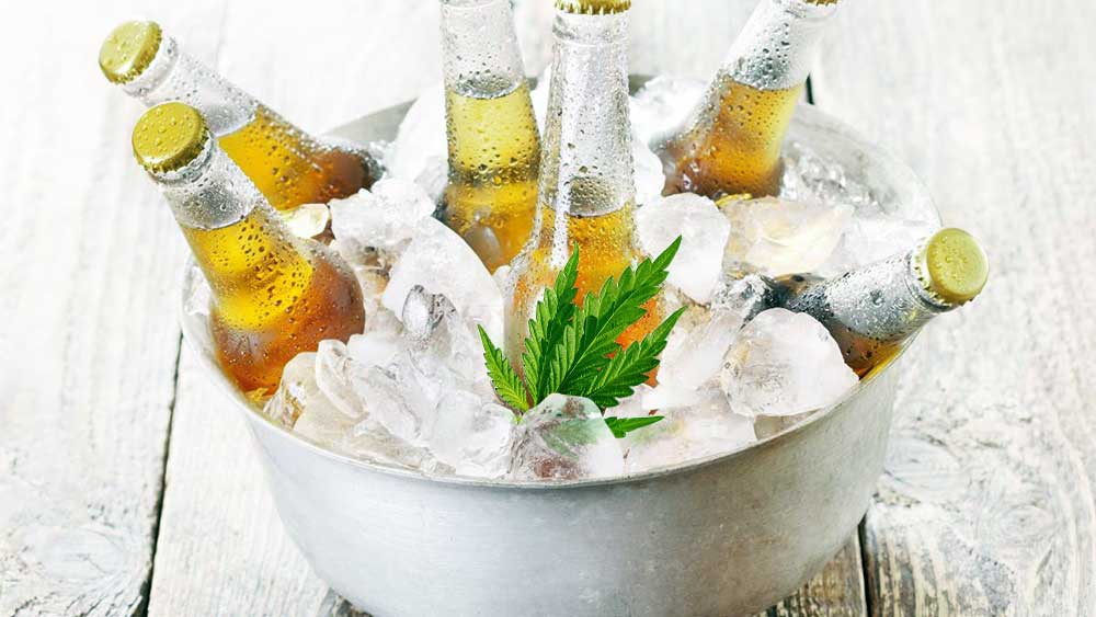 Beverages in an ice bucked, with a cannabis leaf inside