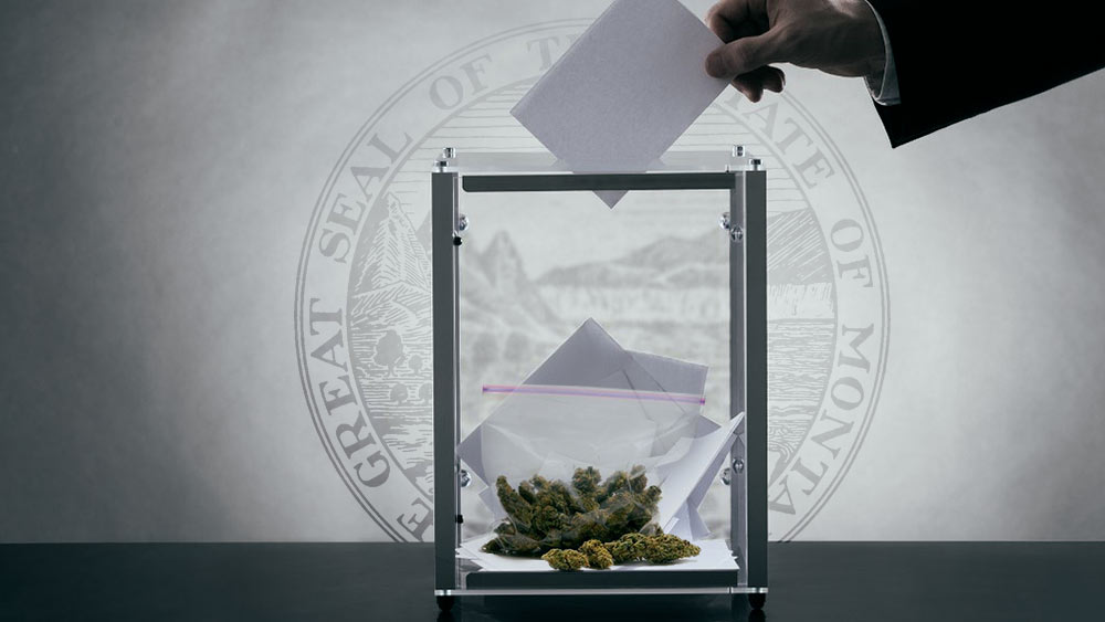 Hand placing a vote in a box with weed